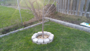tree ring  landscaping stones