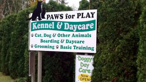Dog Kennel & Daycare in Salmon Arm BC