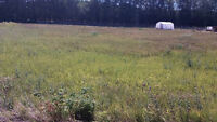 10 % OFF, RENT TO OWN LESSER SLAVE LAKE LOTS (KINUSO)