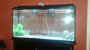 55 Gallon Fish Tank with Stand and all Equipment Needed
