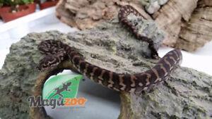 SPÉCIAUX : Python tapis Jungle x breld jaguar, Magazoo