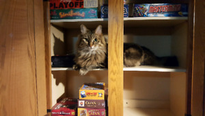 Cat Boarding: Kitties Home Away From Home