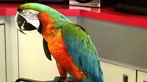 Willing to take any parrots