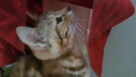 2 gorgeous loving kittens