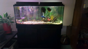 75 gallon aquirum with fish