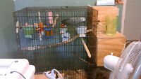 Huge parrot breeding cage and box