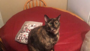 Looking to rehome my 2 cats