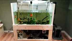 Freshwater fish for sale high quality and diverse  West Island Greater Montréal image 6