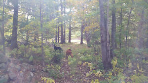 51 acre Leisure and Hunting property