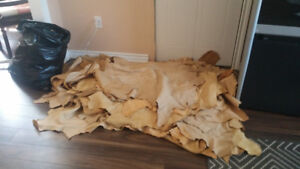 Deer hides great for crafts or leather. 23 and a bag of pieces