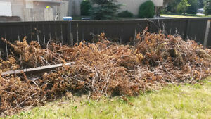 South Calgary Junk Removal and yard clean ups--587-436-1853