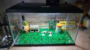 Brand new fish tank with everything
