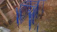 sheep tilt table