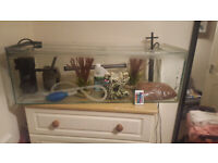 Fishtank with all necessary equipment