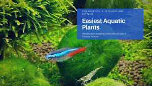 SALE: Beginner Low Light Aquatic Plants and more!!