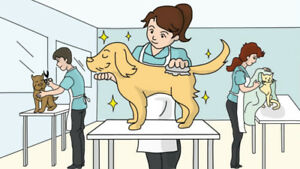 Seeking Part-Time Grooming Assistant - Full Time Dog Groomer