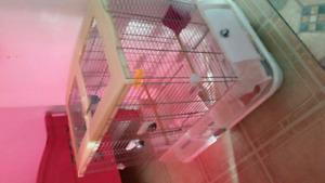 2 cage vision oiseaux equipé a vend.