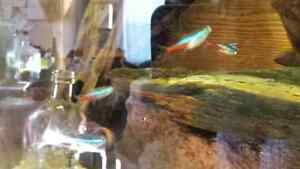 Tropical fish for rehoming