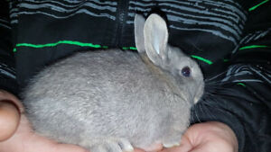 Rabbits and Bunnies for sale,