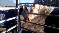 Wanted: Equine Not-for-Profit seeking donations