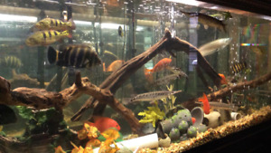 In search of a 250 or 300 gallon aquarium with stand