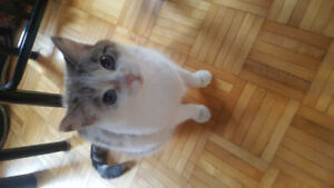 Cat needs a new home and family asap