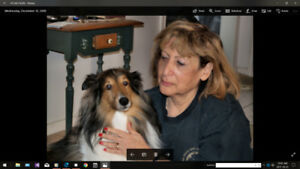 DEVOTED TO  DOGS  TRAINING  AND  BEHAVIOR  MODIFICATION