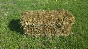 Approx. 100 bails of straw for sale $2.50 each..