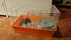 2 Male rats with Cage for sale