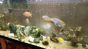 Complete 55 gallon tank with tropical fish