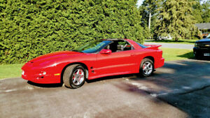 Meticulously Maintained / Original Owner Pontiac TransAm