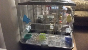 Bird cage 1ft/about 2.5/2