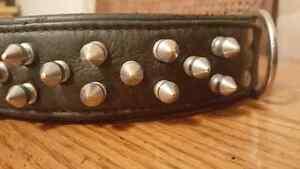 Angel genuine german leather dog collar St. John's Newfoundland image 5