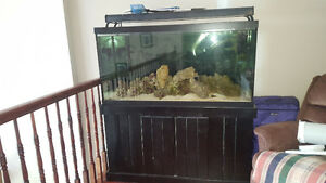 75 gallon saltwater aquarium $500 obo