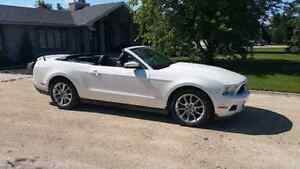 2011 Ford Mustang Convertible V6 305 HP FINANCE Priced to Sell