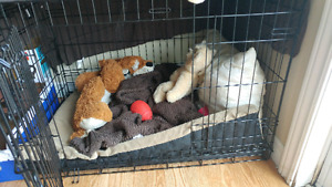 Large dog crate for sale 36×23×25