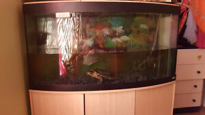 2 tortues avec Aquarium 70 gallons