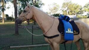Horse Massage Equissage Logan Village Logan Area Preview