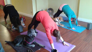 Yoga for You & Your Dog!