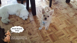 Sitting for small friendly dogs in a home of a certified trainer West Island Greater Montréal image 10