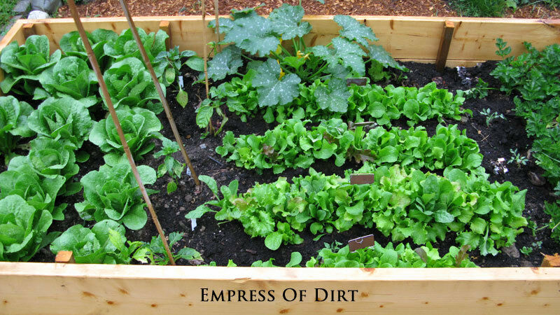 Healthy soil is essential for a happy garden