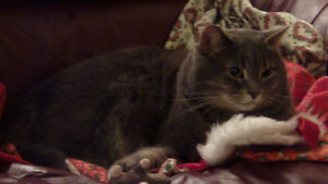 LOST CAT - Cardinal Heights (Steel/Appleford Sts)