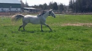 Horse boarding 2 sand rings, indoor arena, trails, jumps +