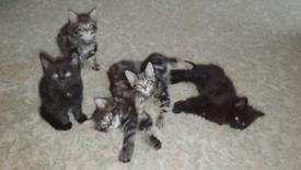 5 lovely kittens