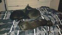 4 month old kittens