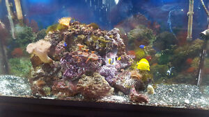 60 gallon established SALT WATER tank with 8 fish