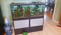 two fish tanks with fish make me offer trades welcome