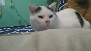 Lost Cat - Joey-Reward!!