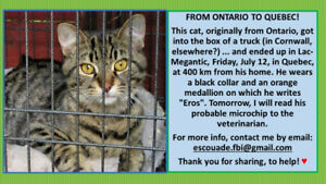 TABBY CAT LOST IN ONTARIO!!! FOUND IN QUEBEC!!