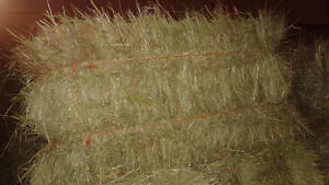 Small Square Grass Hay Bales for Horses
